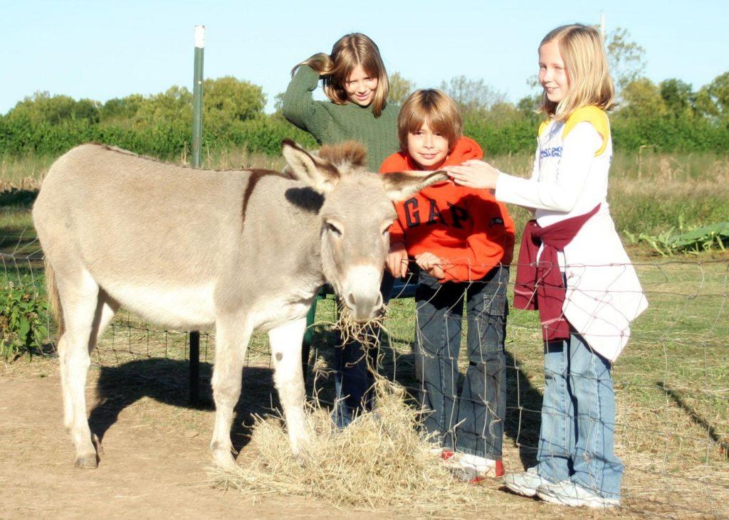 copii la ferma
